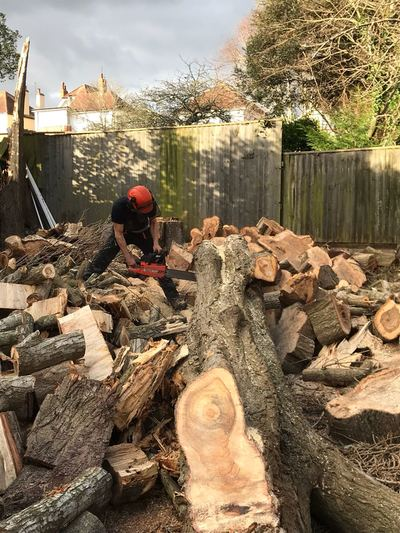 Poplar, Lombardy, tree, felling,cleaning,clearing,